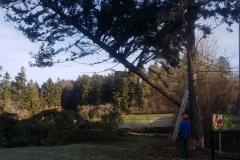 Bäume fällen im Febr 2020