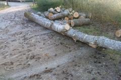 Holz sägen im April 2020